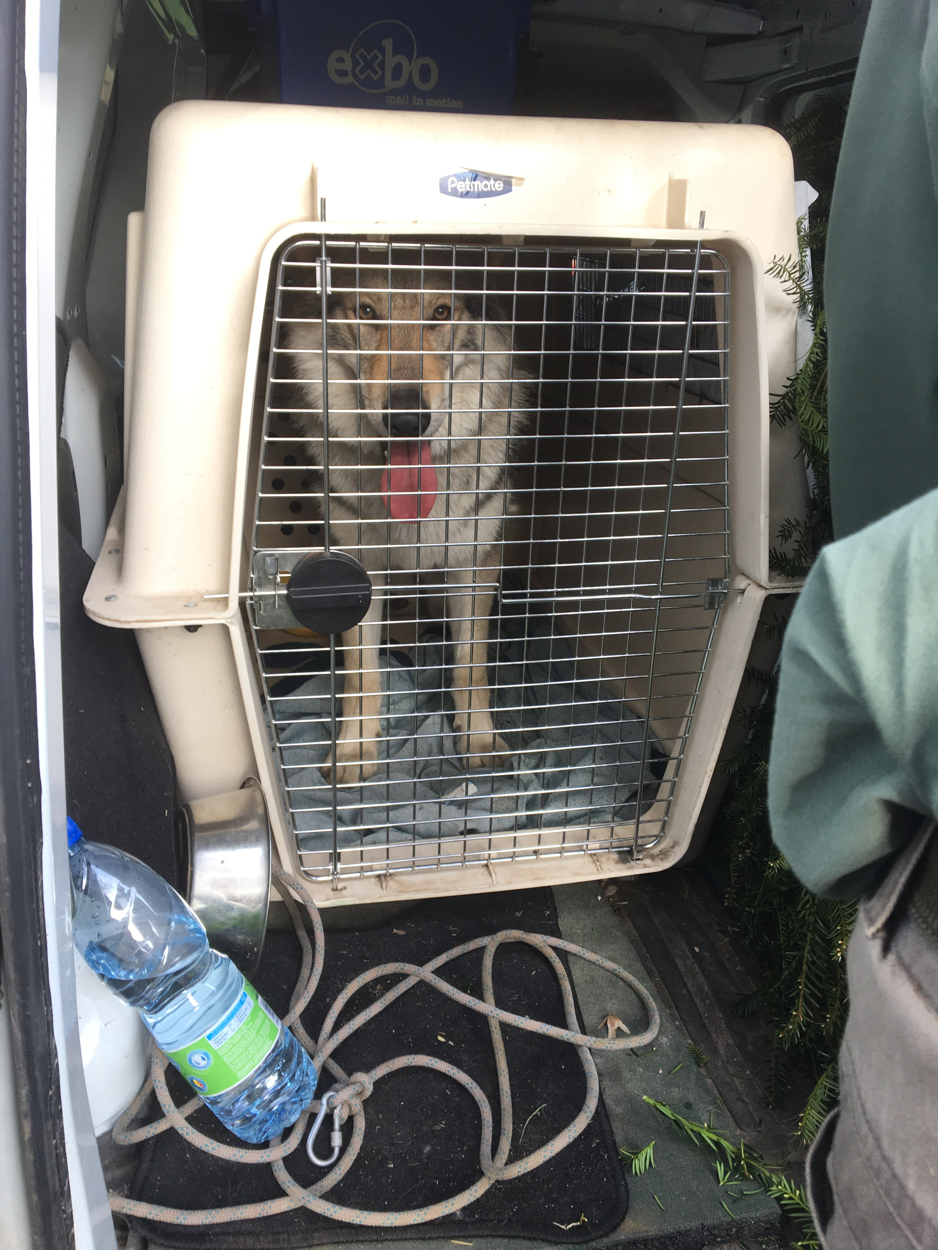 Chien transport cage loup Tcheque