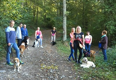 Balades canines socialisation chien